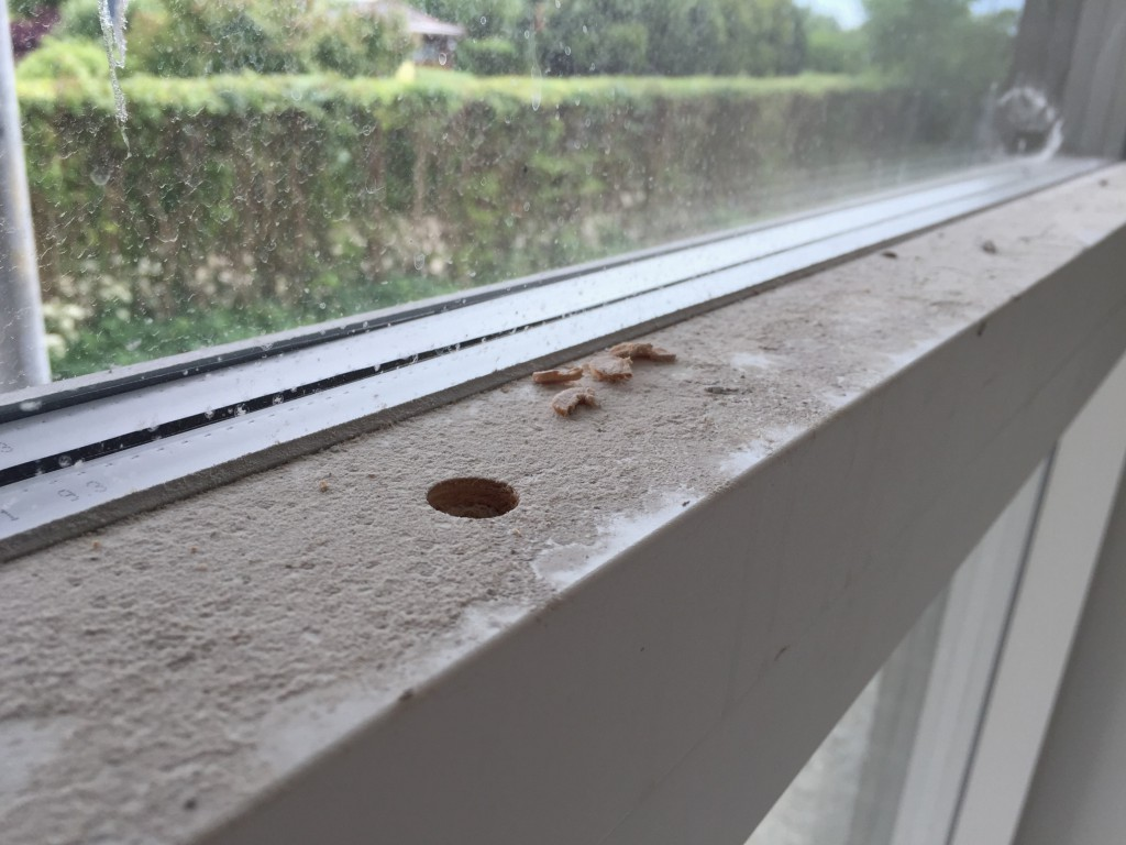 En del rengøring udestår sammen med pudsning af vinduerne.